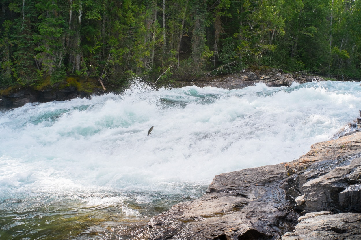 Banff Jasper National Park Walter Waldis