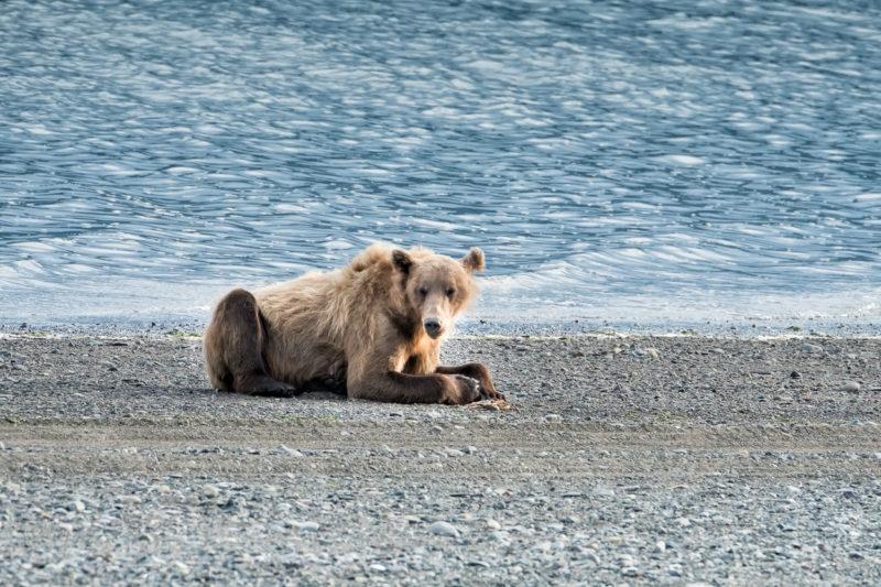 Great Alaska Bear Camp 2016