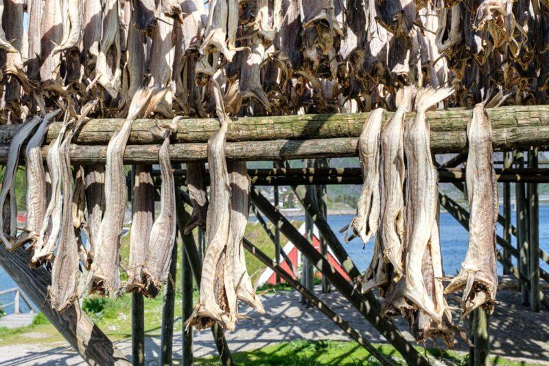 Drying stockfish in Reine.